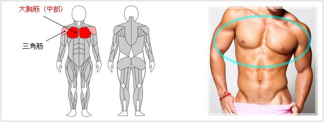 ダンベルフライで鍛えられる筋肉の場所