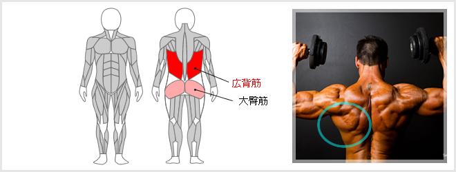 ボディアーチで鍛えられる筋肉の場所