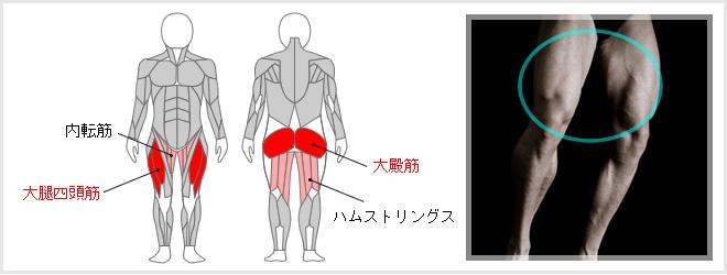 スクワットで鍛えられる筋肉図